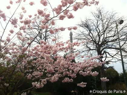 10桜満開鼻炎も満開