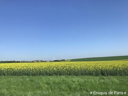 5見渡す限り畑広がる景色