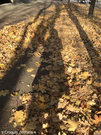 12分厚い落ち葉の吹きだまり
