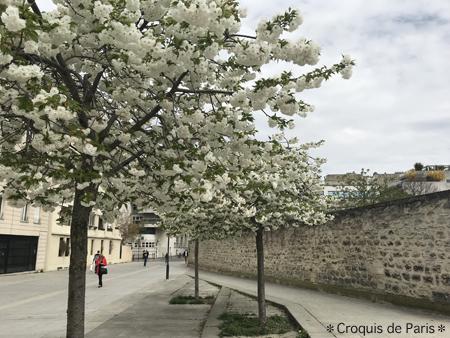 10こちらも見事な桜