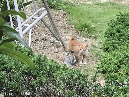 12猫ちゃんちょっぴりふっくらしました