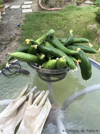 2日々の収穫