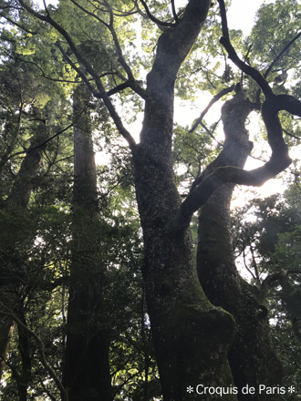 9木洩れ陽の中を