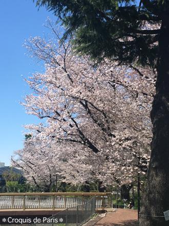 3あーやっぱり日本の桜最高!