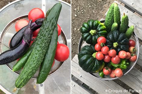 6採れたて野菜